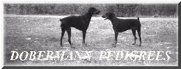 © Dobermann Pedigrees